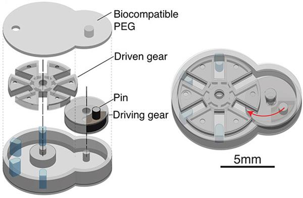 tiny-3d-printed-biobots-could-dispense-drug-doses-inside-your-body-3.jpg