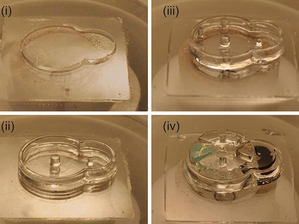 tiny-3d-printed-biobots-could-dispense-drug-doses-inside-your-body-2.jpg